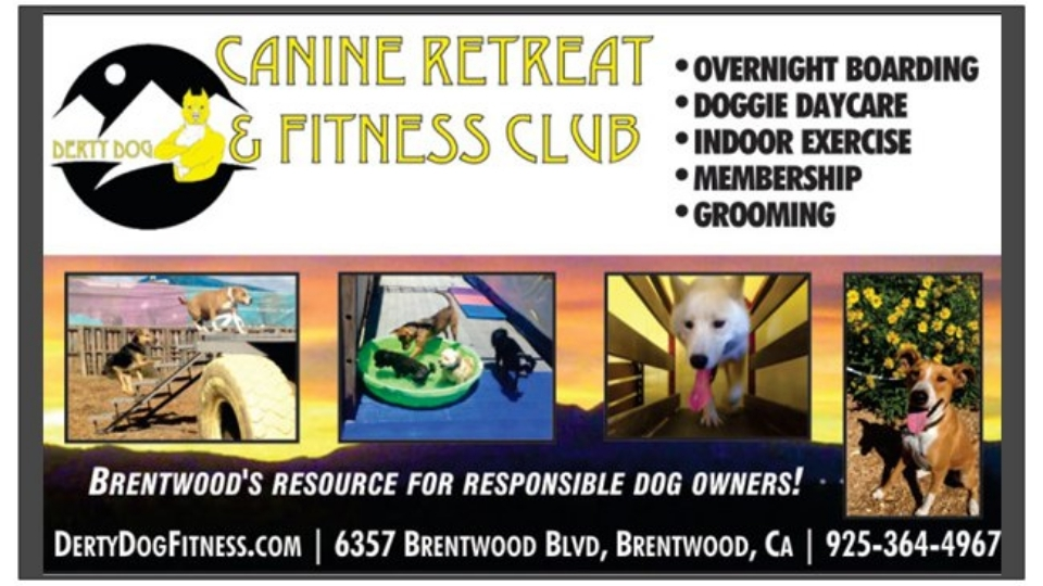 Derty Dog Canine Retreat and Fitness